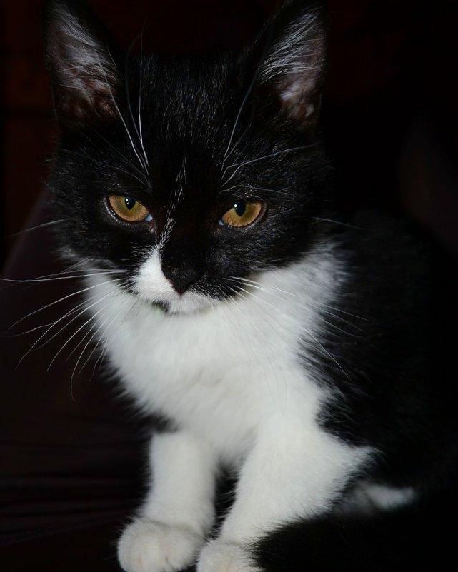 Котик - Натали