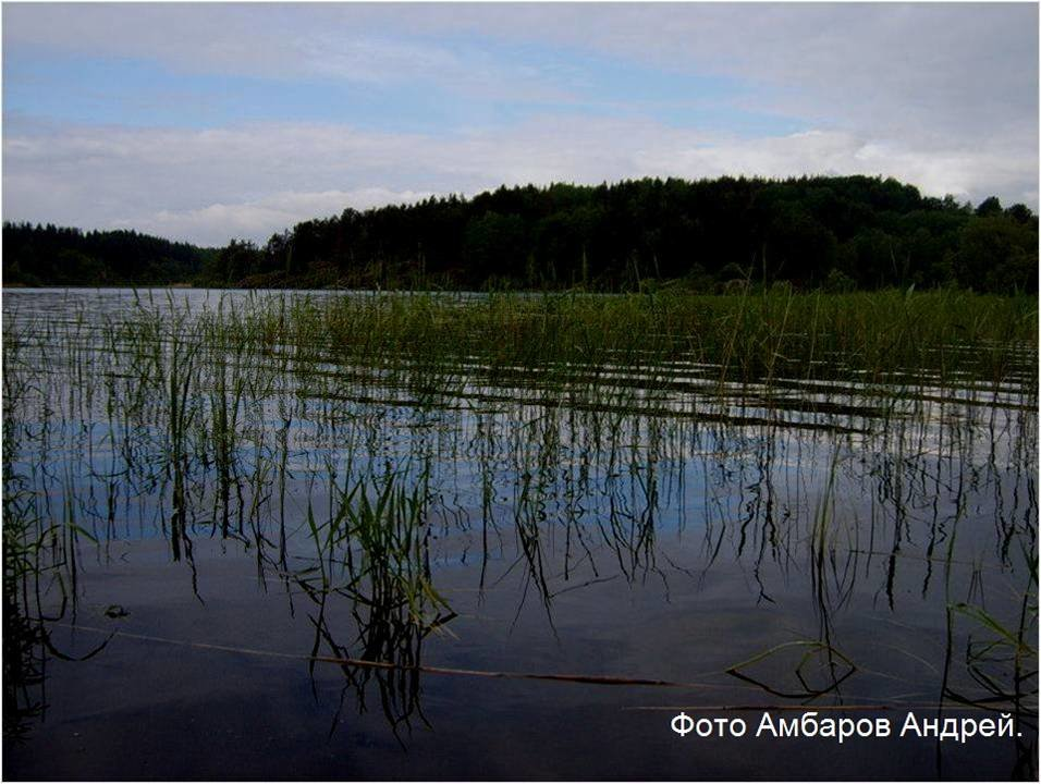 Вид на озеро - Андрей