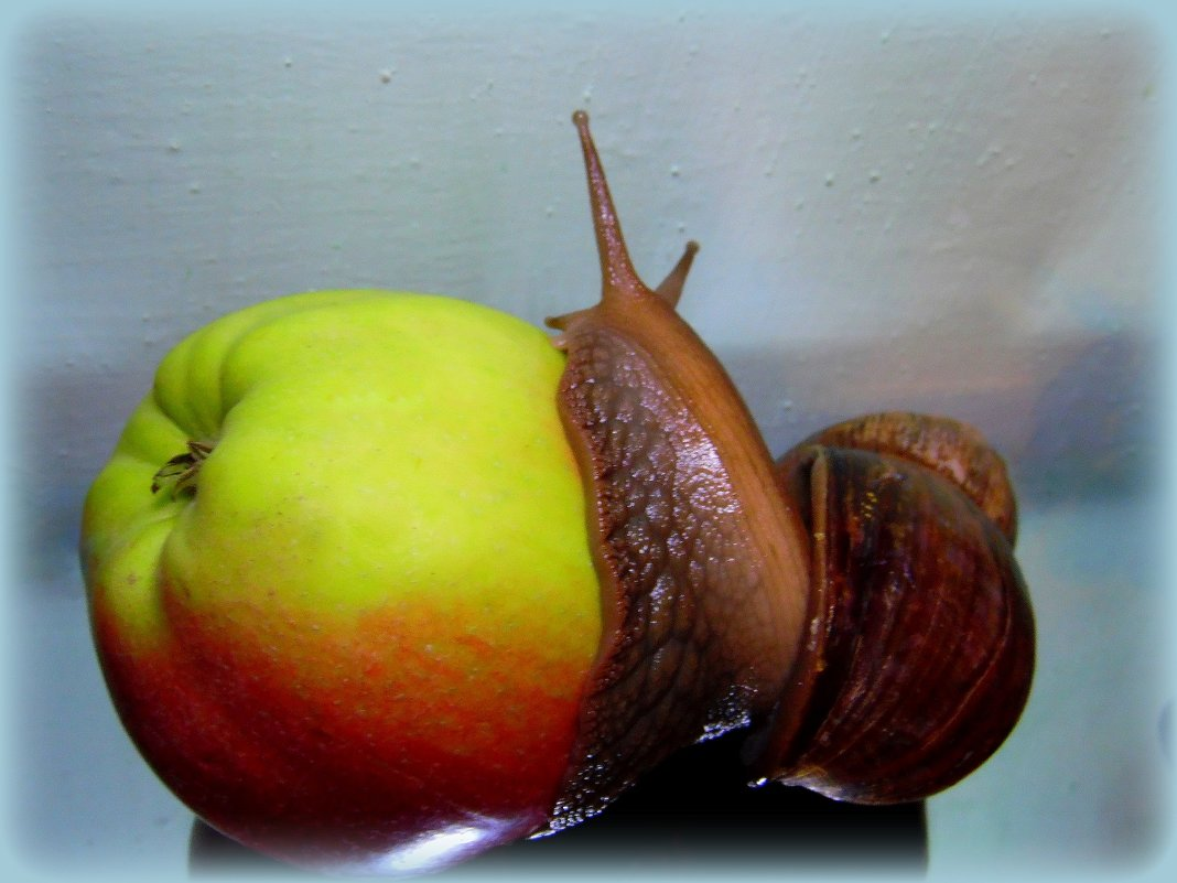Вкусное яблочко. - nadyasilyuk Вознюк