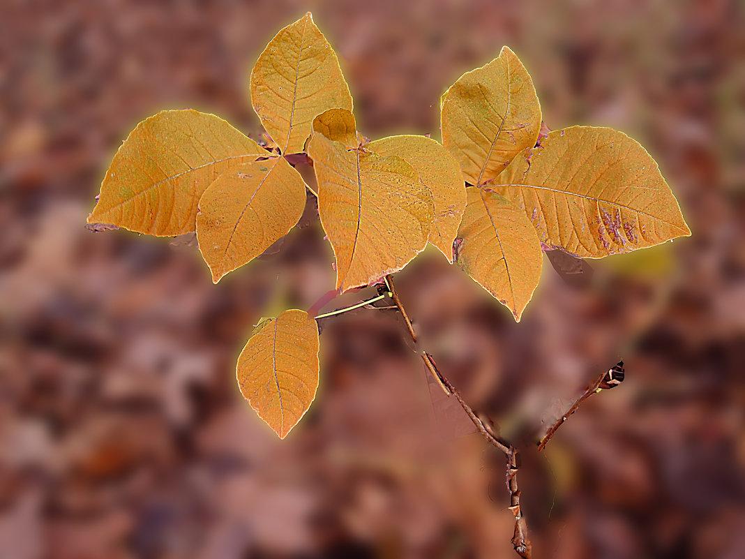 маленький  росток - георгий петькун