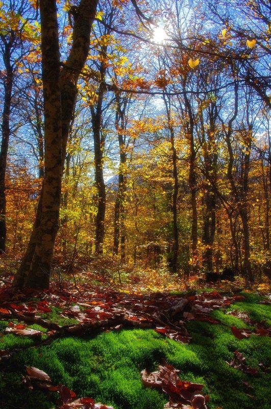 Тепло Осени - Трофимюк Павел
