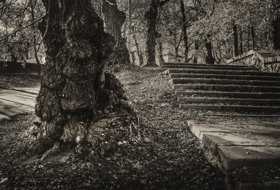 Старое дерево (фрагмент) - Сергей