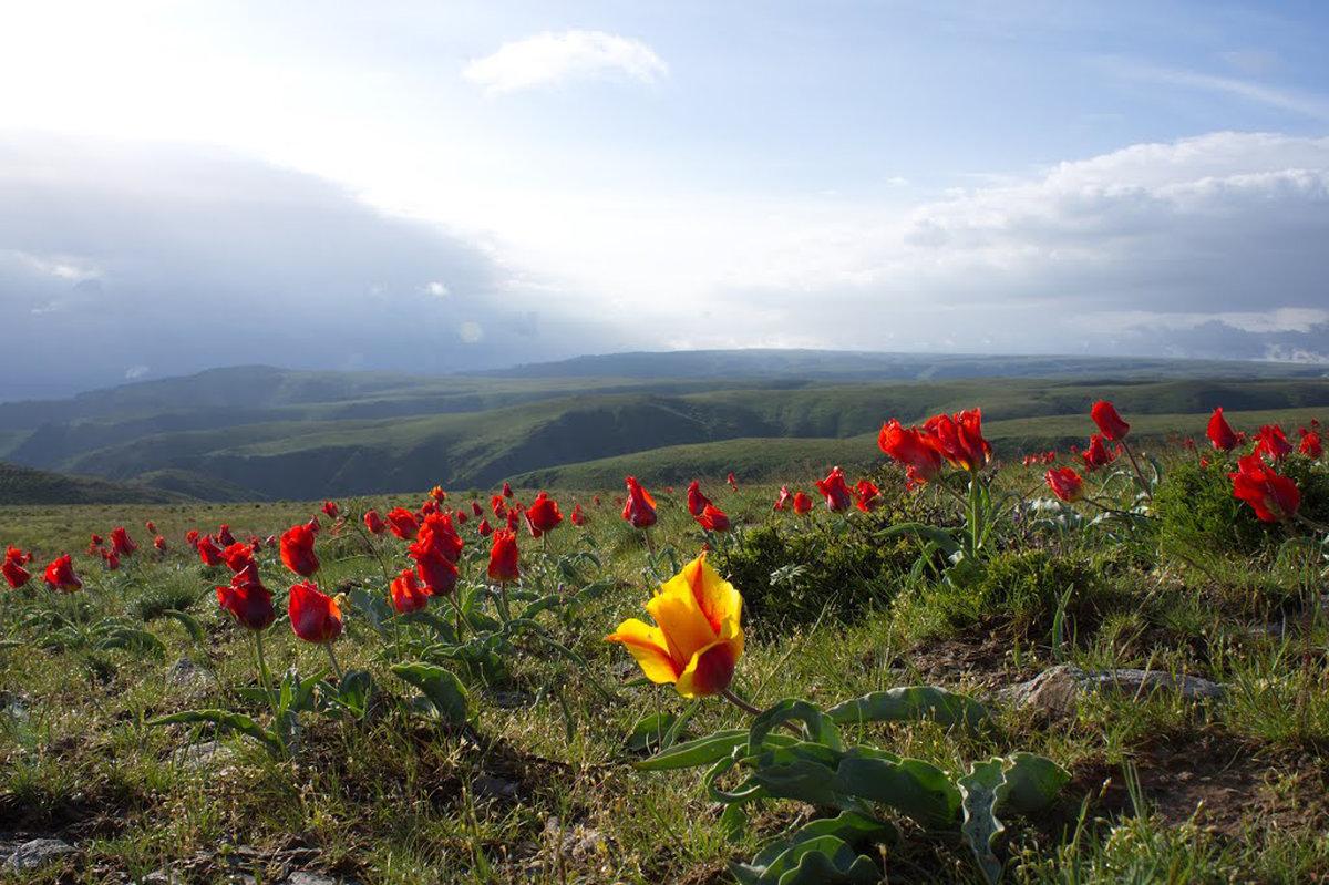 еще тюльпаны - vladimir polovnikov