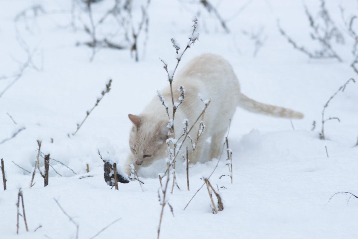 зимний кот - Алена Д
