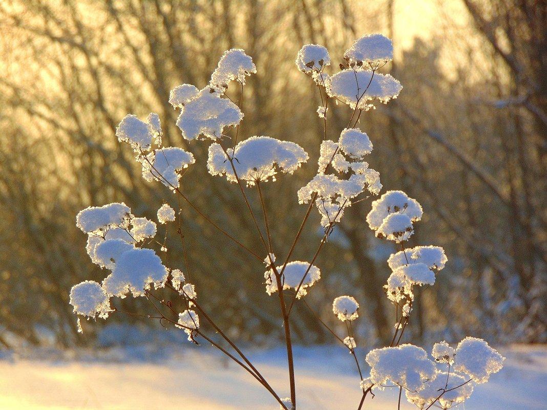 Снежные цветы. - nadyasilyuk Вознюк