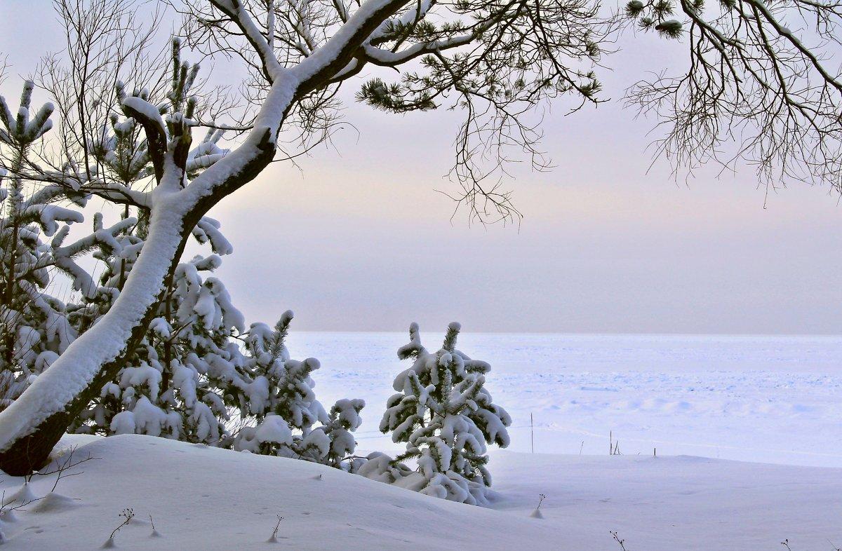 Зимний сон - Marina Pavlova