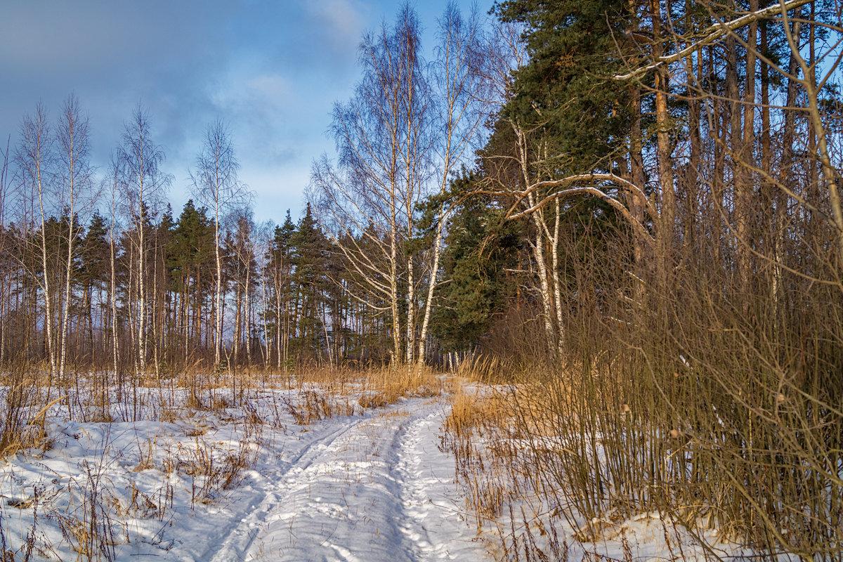 Зима все таки пришла - Андрей Дворников