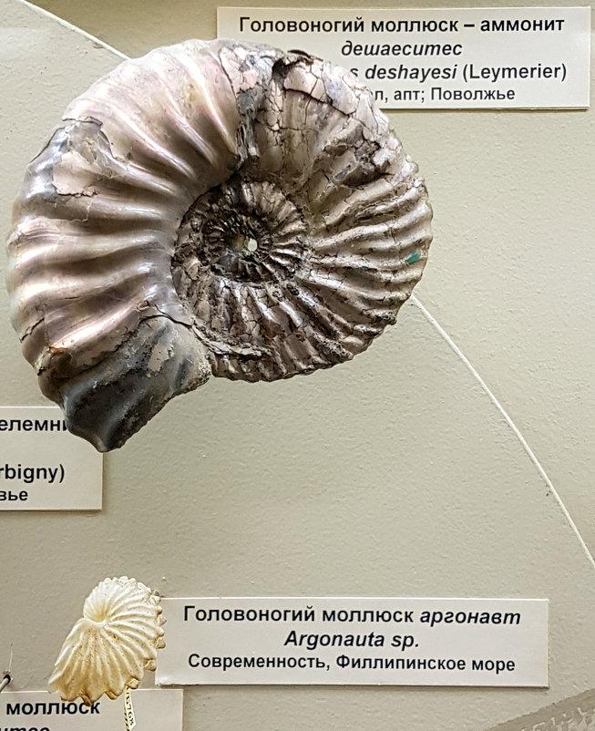 В московском палеонтологическом музее - Елена