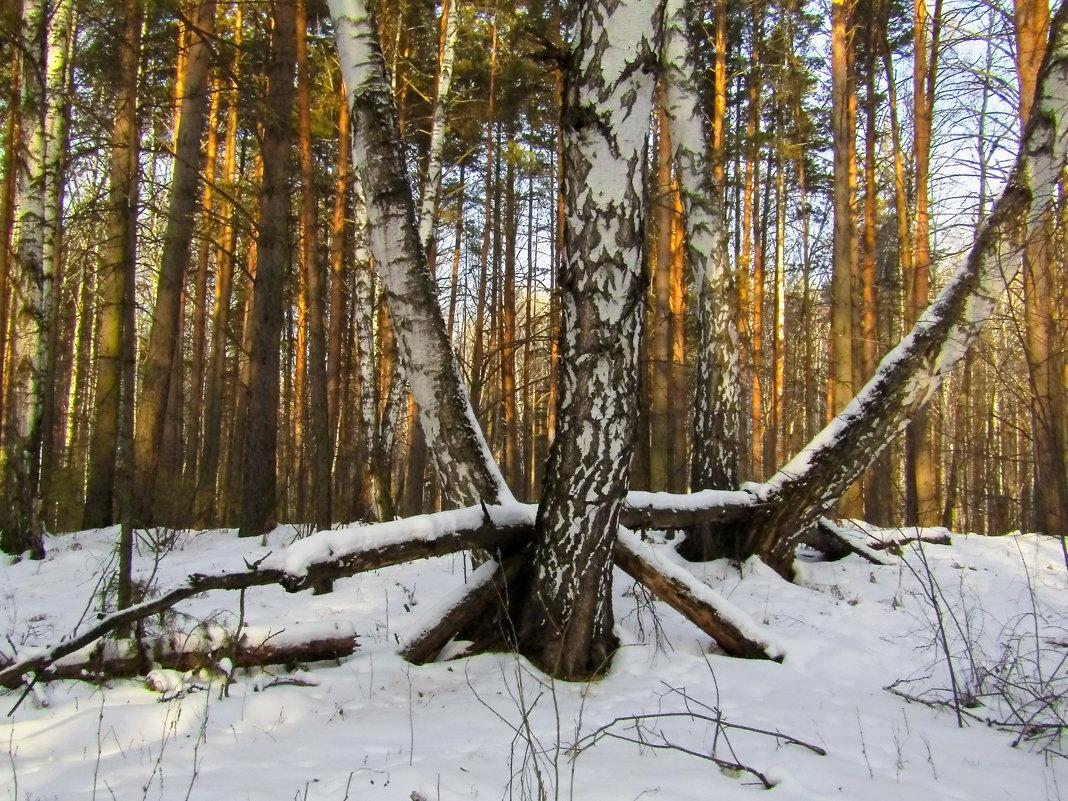Как леший дрова пилит. - Сергей Чернышев