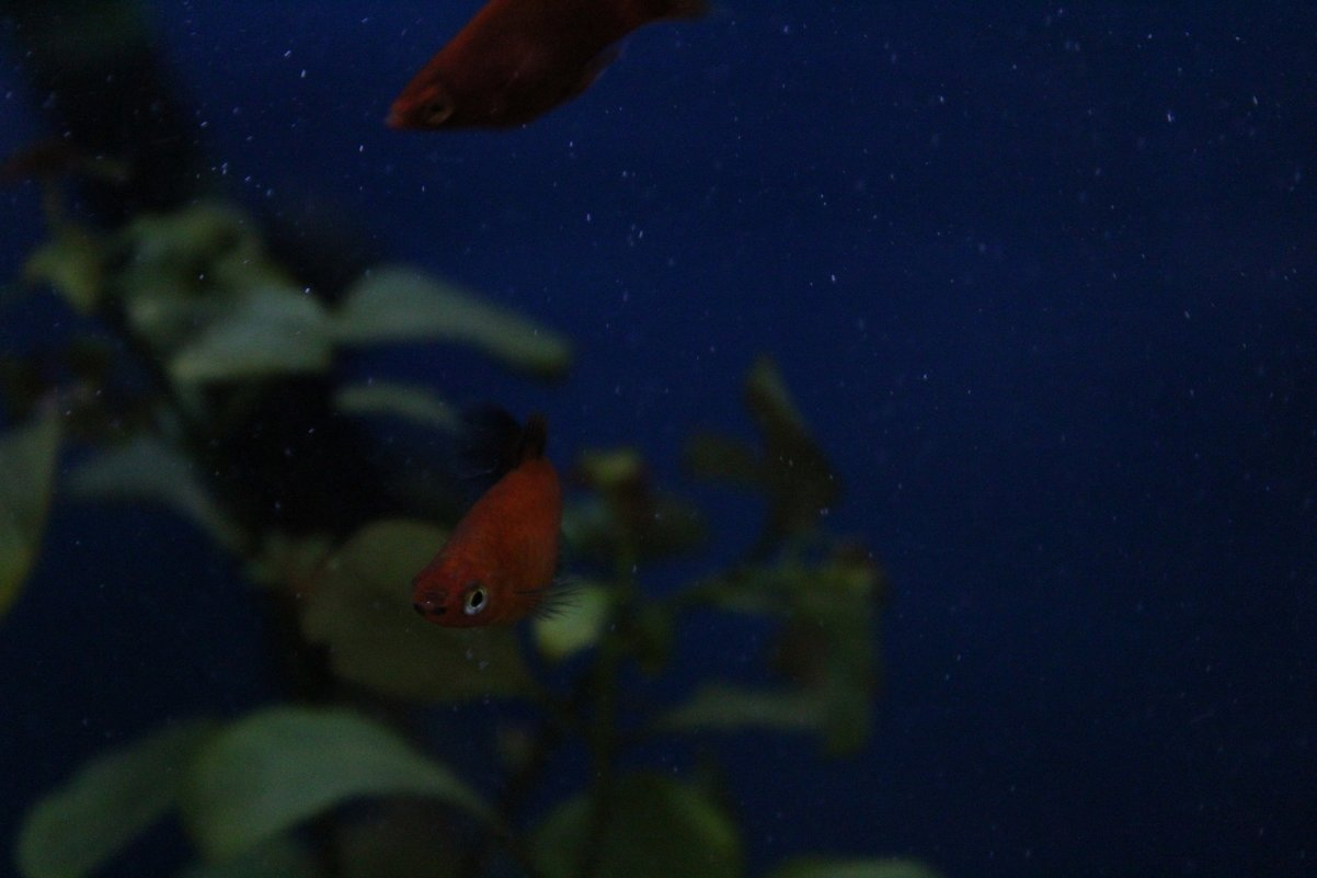 Подводный мир - Faina Popova