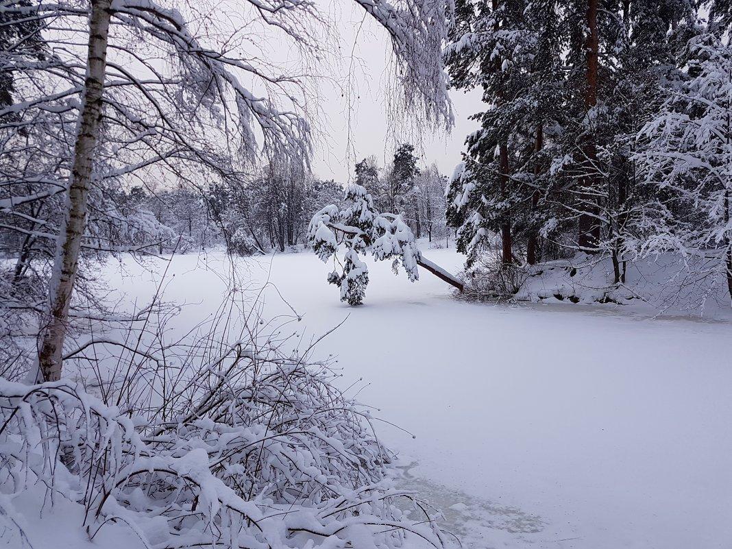 В зимнем парке царство сна... - Ольга Русанова (olg-rusanowa2010)