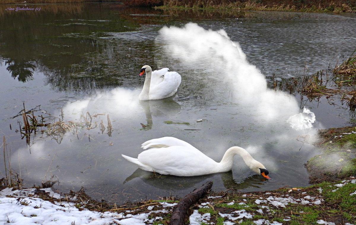 Лебеди - Nina Yudicheva