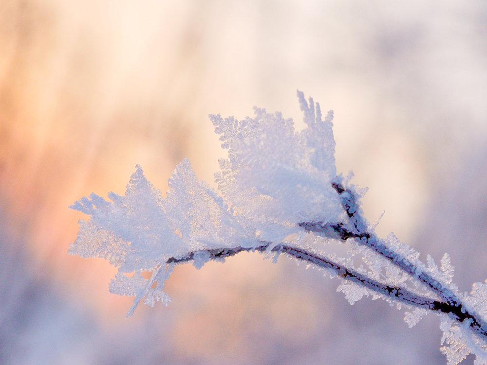 зимы рисунок - scbi