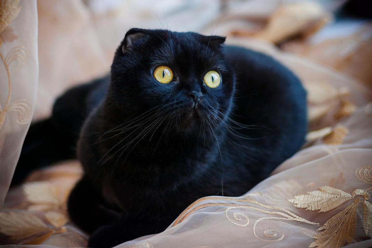 Моя кошка - Ольга Геращенкова