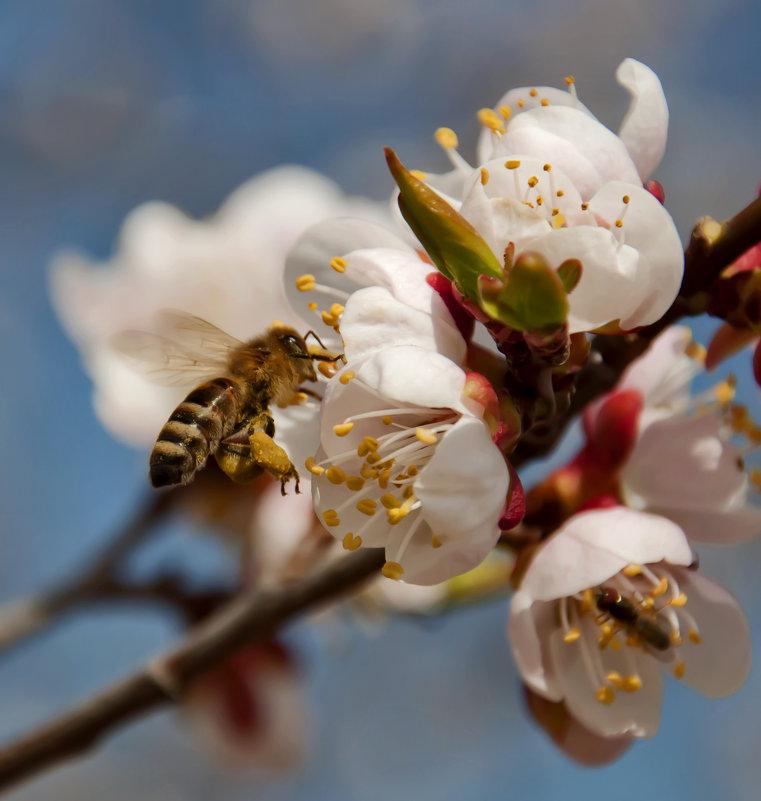 Лета ждать уже недолго, прилетай скорее пчелка! - Наталья Димова