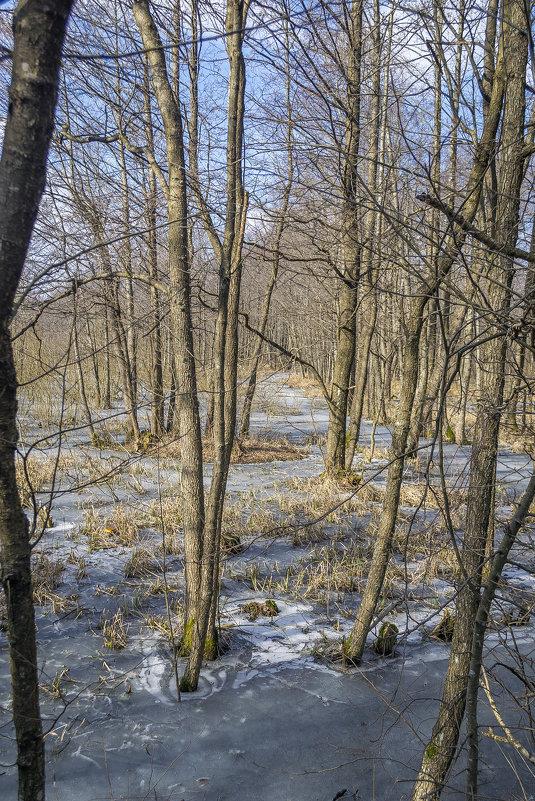 Весенний лес - Sergey Polovnikov