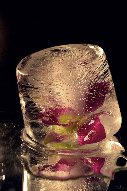 Песнь льда - Татьяна