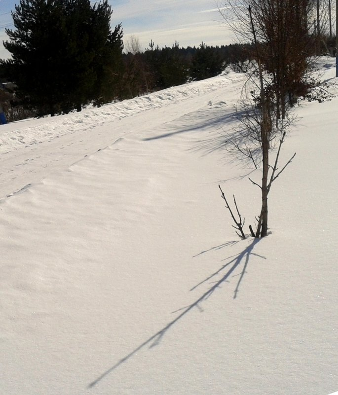 Тень на снегу - Мила
