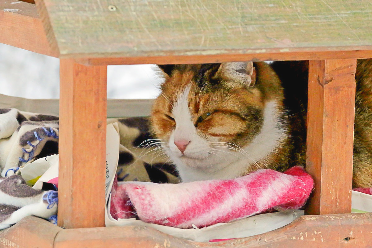 В домике теплее и сытнее - Павел