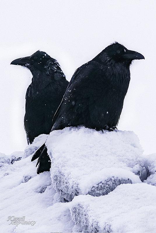 Два ворона. - Юрий Харченко