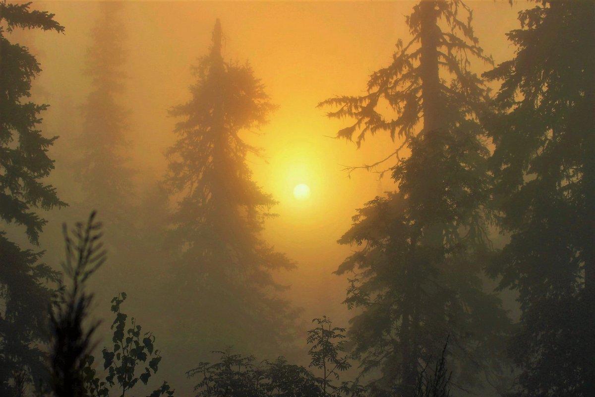 В туманных дебрях восходит солнце - Сергей Чиняев