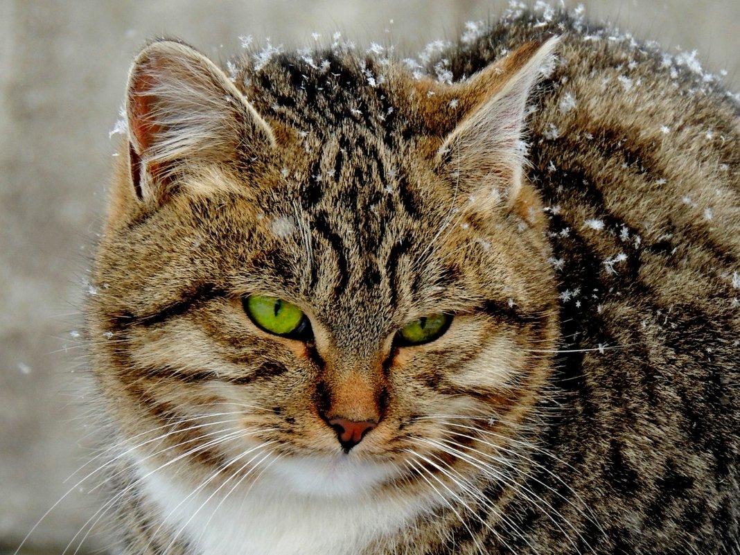 В снежинках - Попкова Александра
