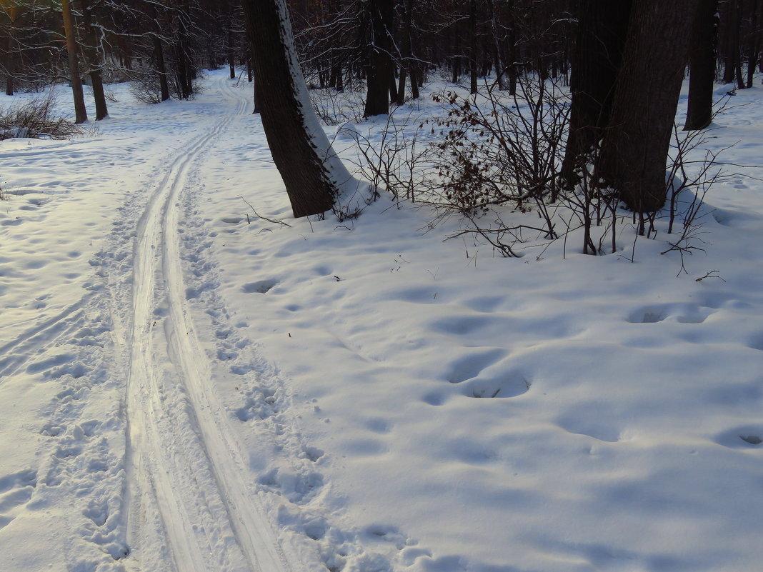 Вьется вдаль лыжня лесная - Андрей Лукьянов