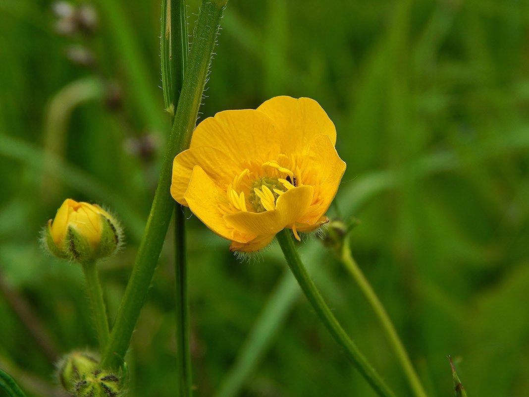 Жёлтый цвет - Валентина Пирогова