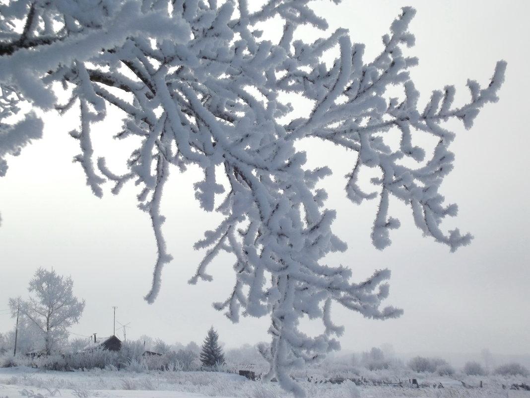 Ажурная зимняя ветка - Светлана Рябова-Шатунова