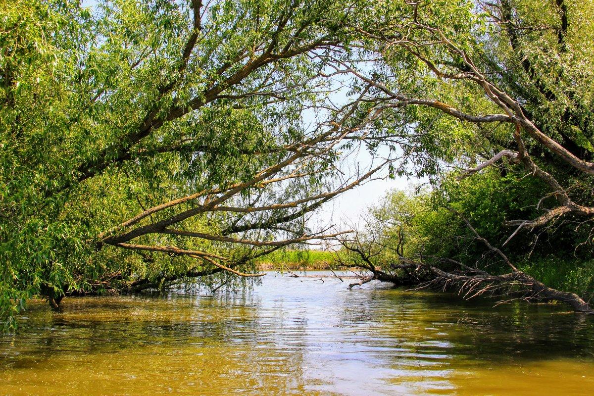 Следы на воде - Вячеслав Случившийся