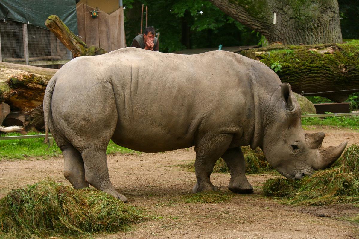 Африканские фауны. - Mila .