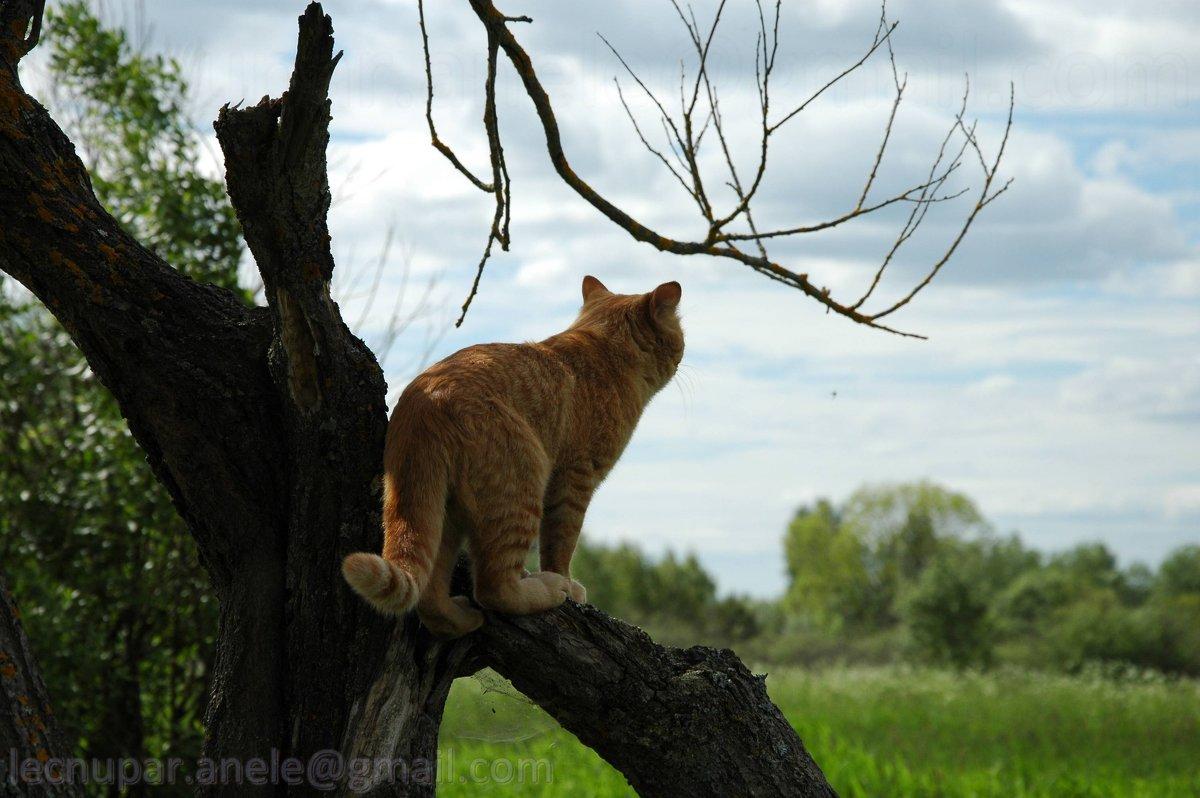 Взор кота - Elena Gosteva