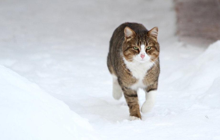 Мартовский кот - Akkelo _p_