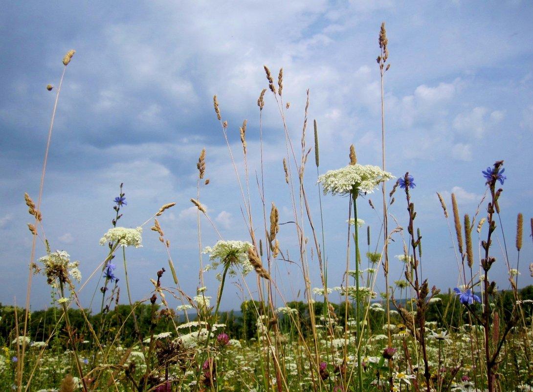 под густою синевою травы пышные растут... - Галина Флора