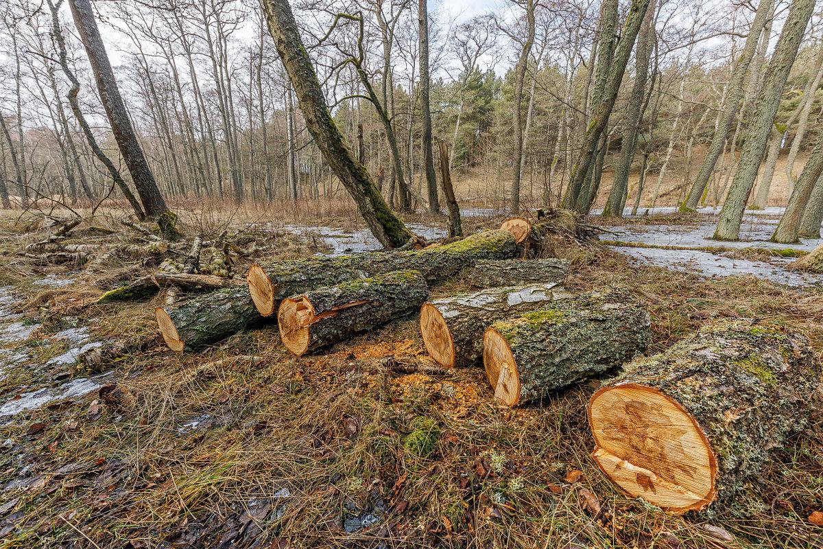 Про деревья 2 - Владимир Самсонов