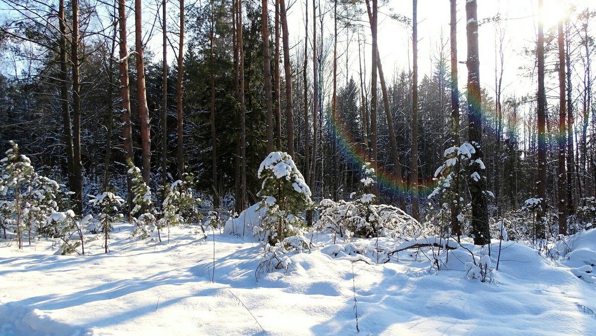 Фото минувшей зимы - Милешкин Владимир Алексеевич