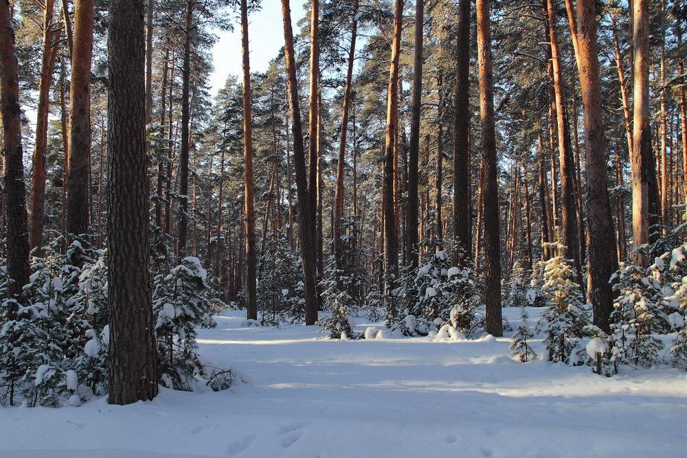 Простился март с последним снегопадом.... - Лесо-Вед (Баранов)