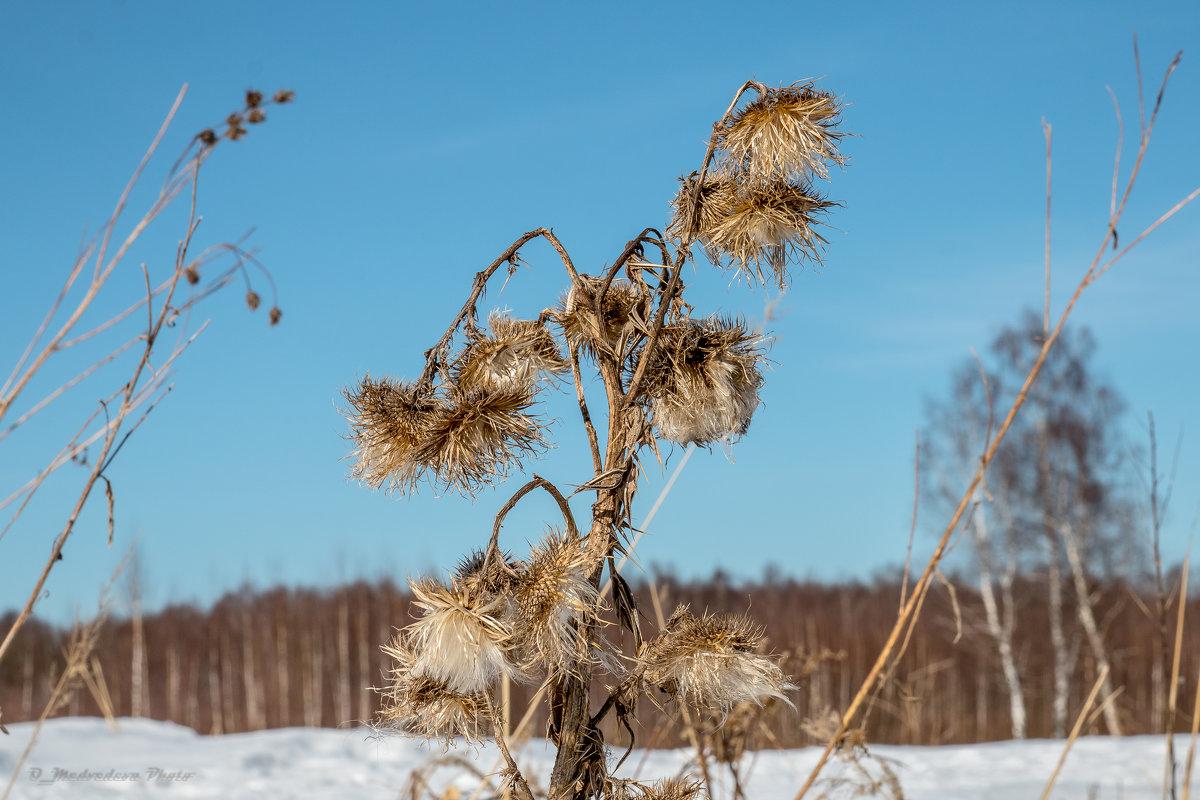 сухая трава - Ольга (Кошкотень) Медведева