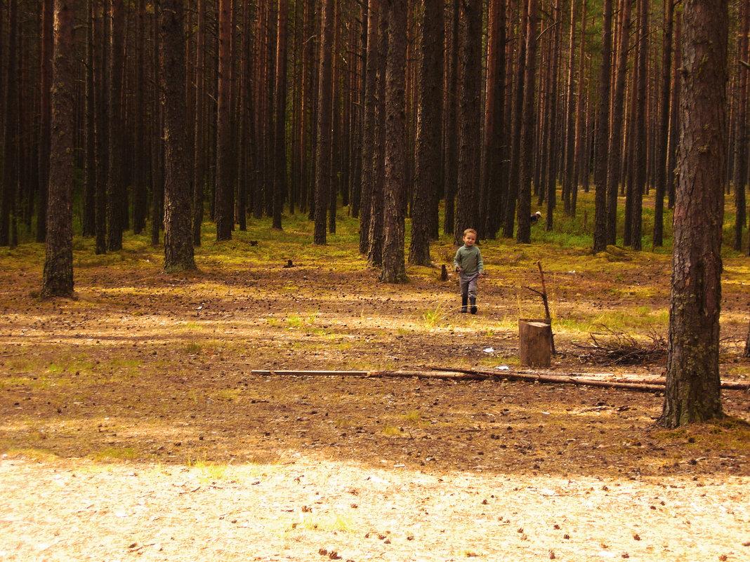 лес - Eva Ivel