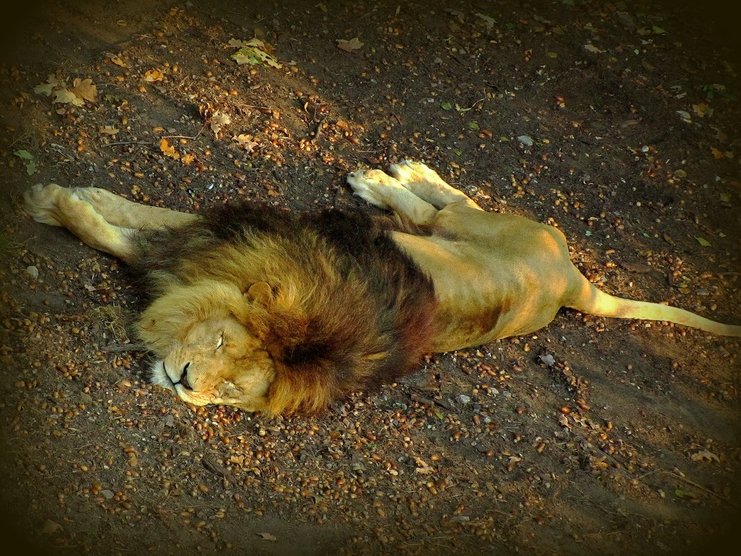 Не проспи,царь,свое царство - Сергей Карачин