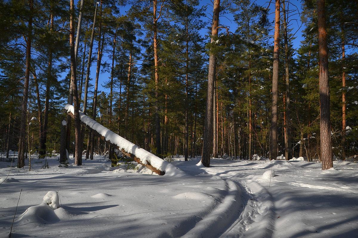 Мартовский лес - Алексей (GraAl)