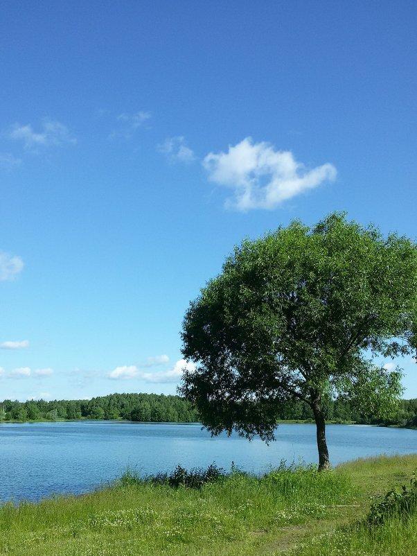 Дерево у пруда. - swetalana Timofeeva