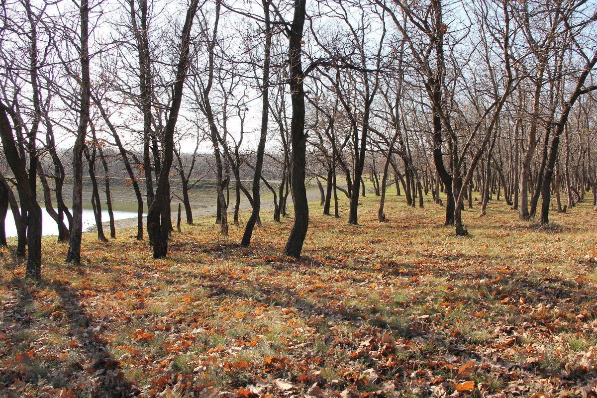 Осенний лес. - Владимир Усачёв