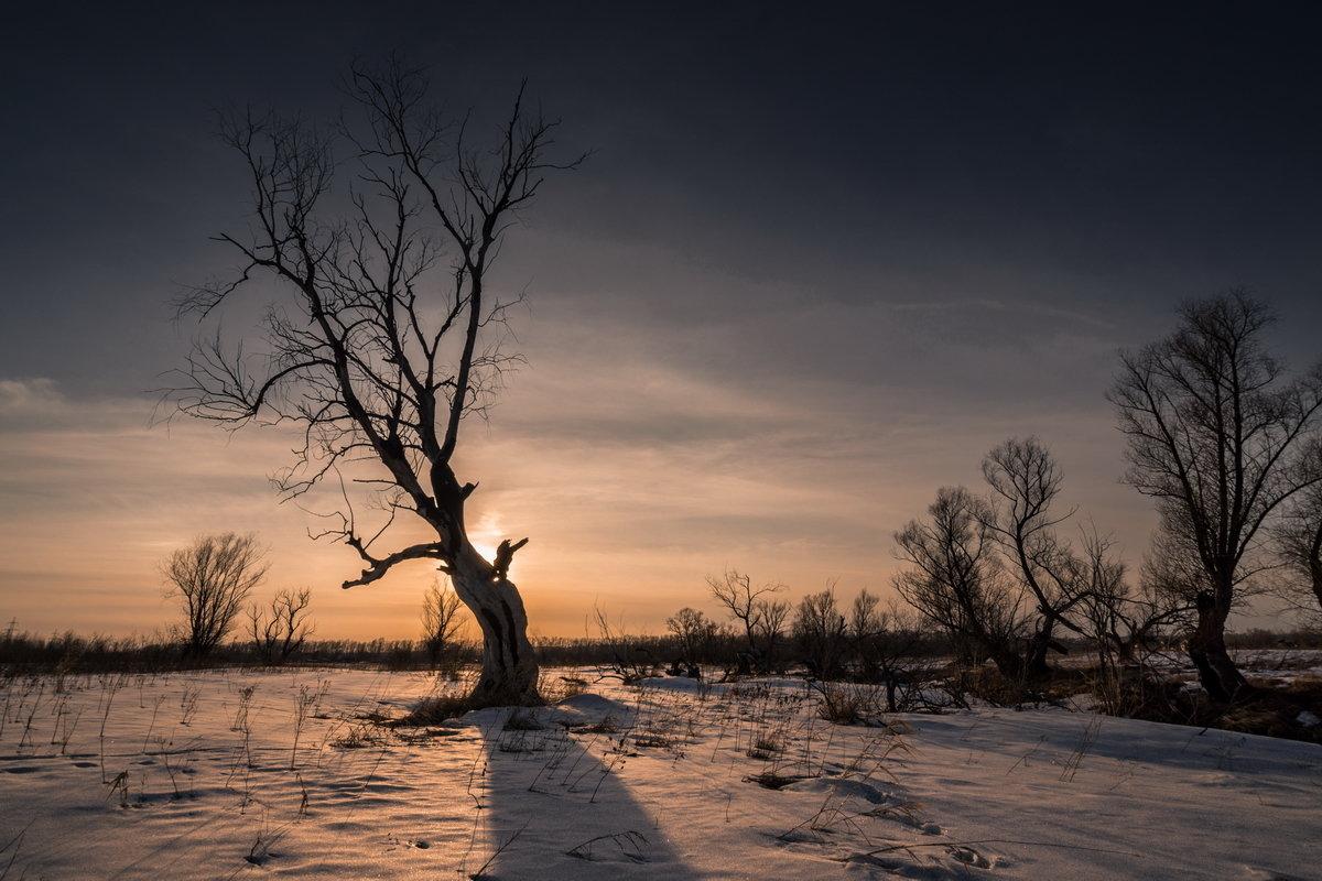 Дерева - Виктор Четошников