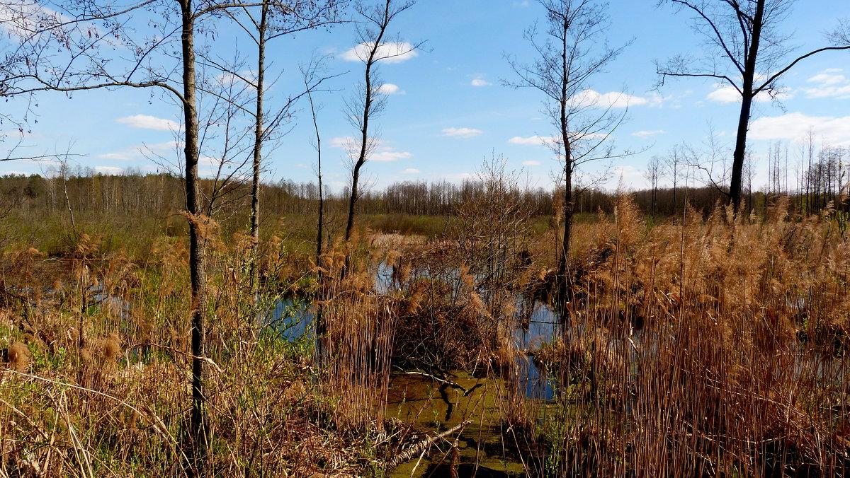 оттаявшее болото - Александр Прокудин