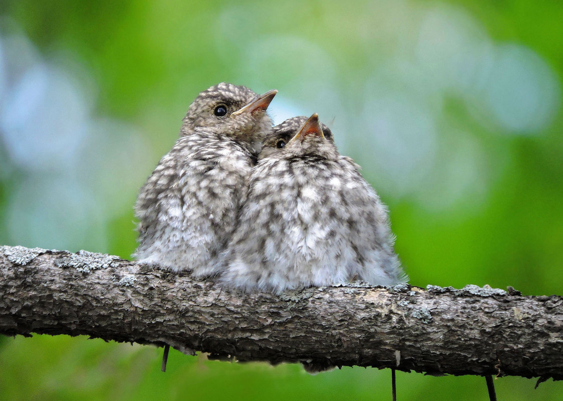 1 апреля- День Птиц! С праздником, орнитологи и  все любители птиц! - Ната Волга