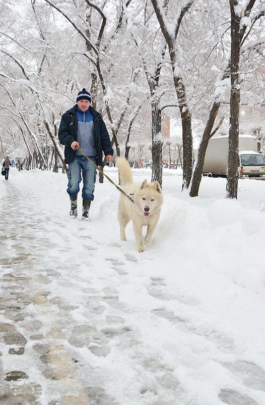 Охотничья прогулка - юрий Амосов