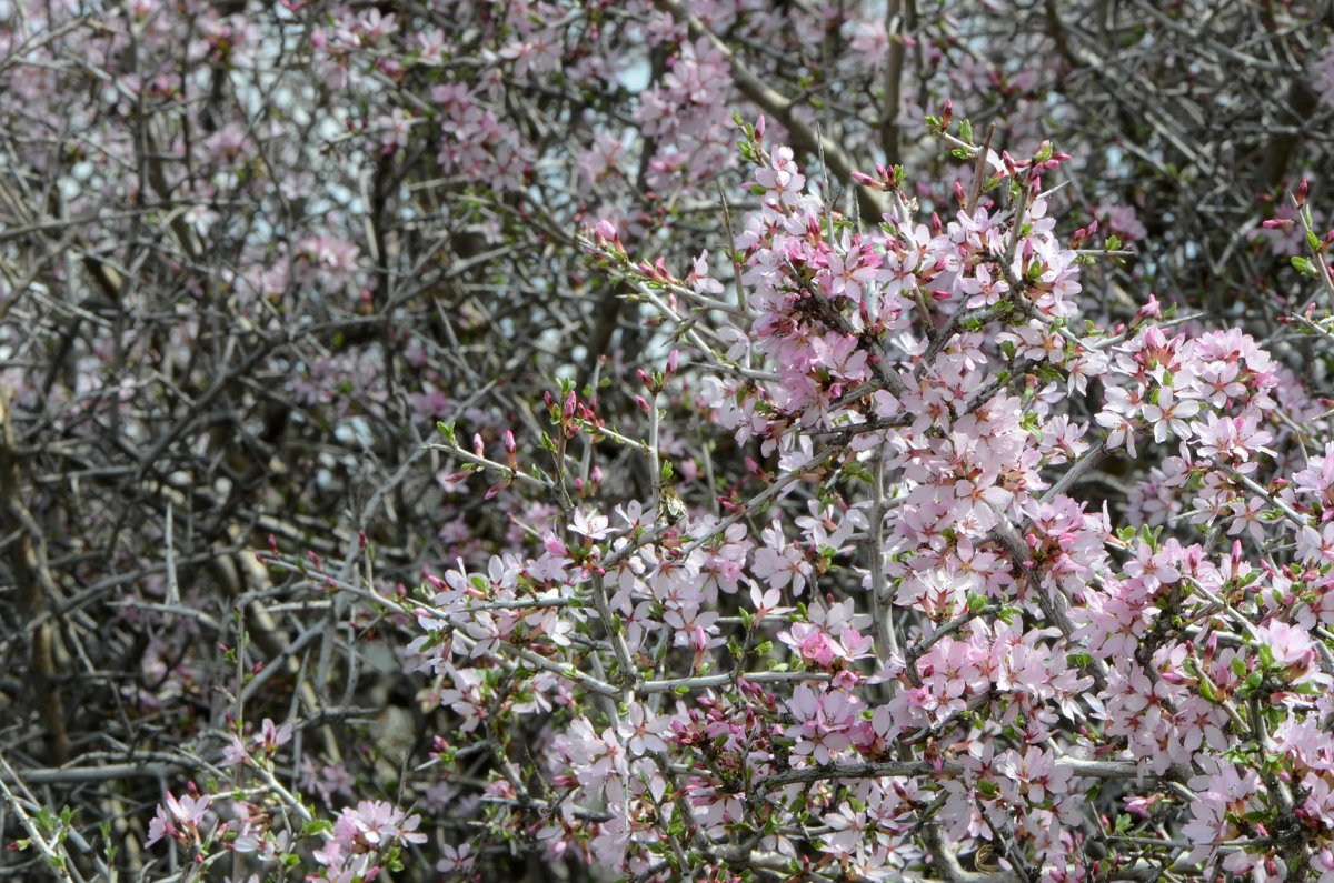 Цветы в конце марта - Александр Грищенко