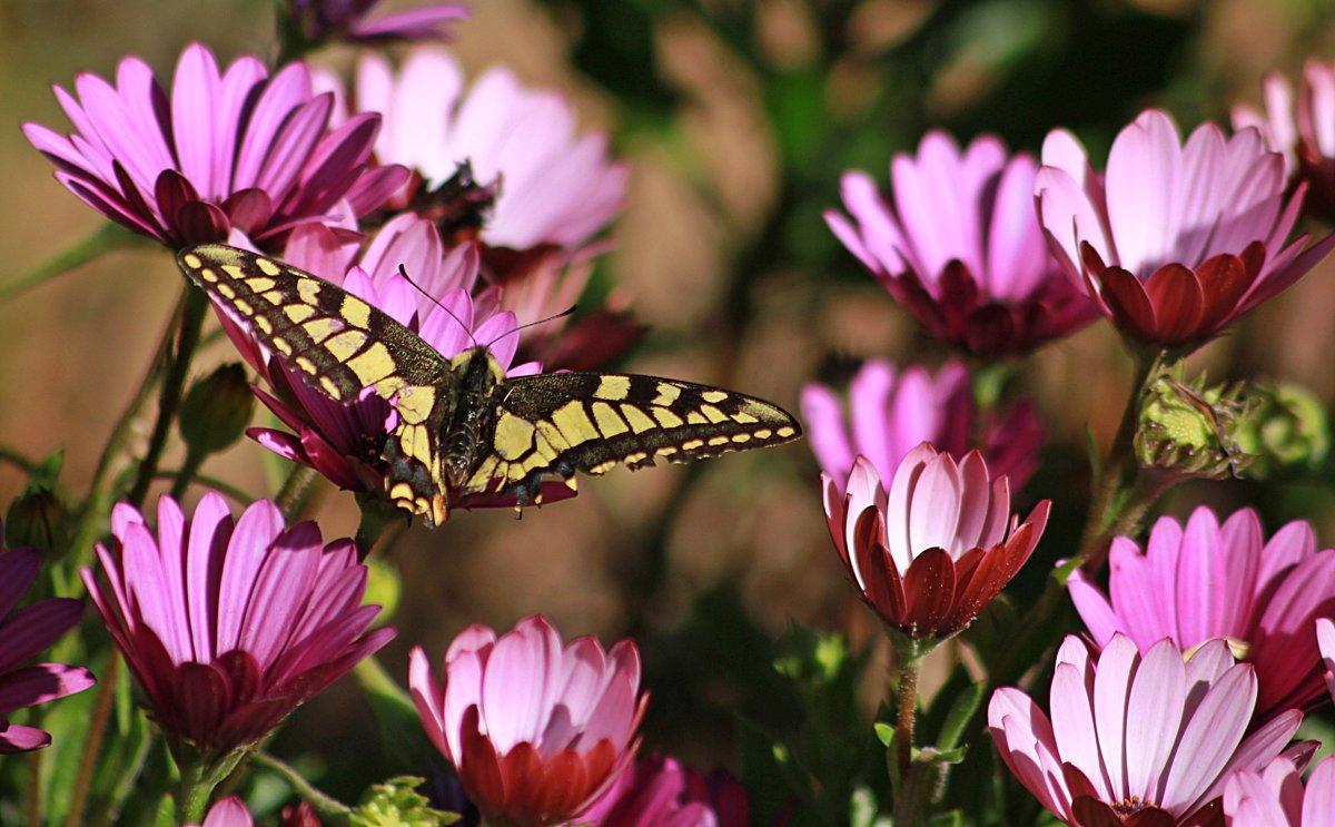 Бабочка и цветы. - Елена Олейникова