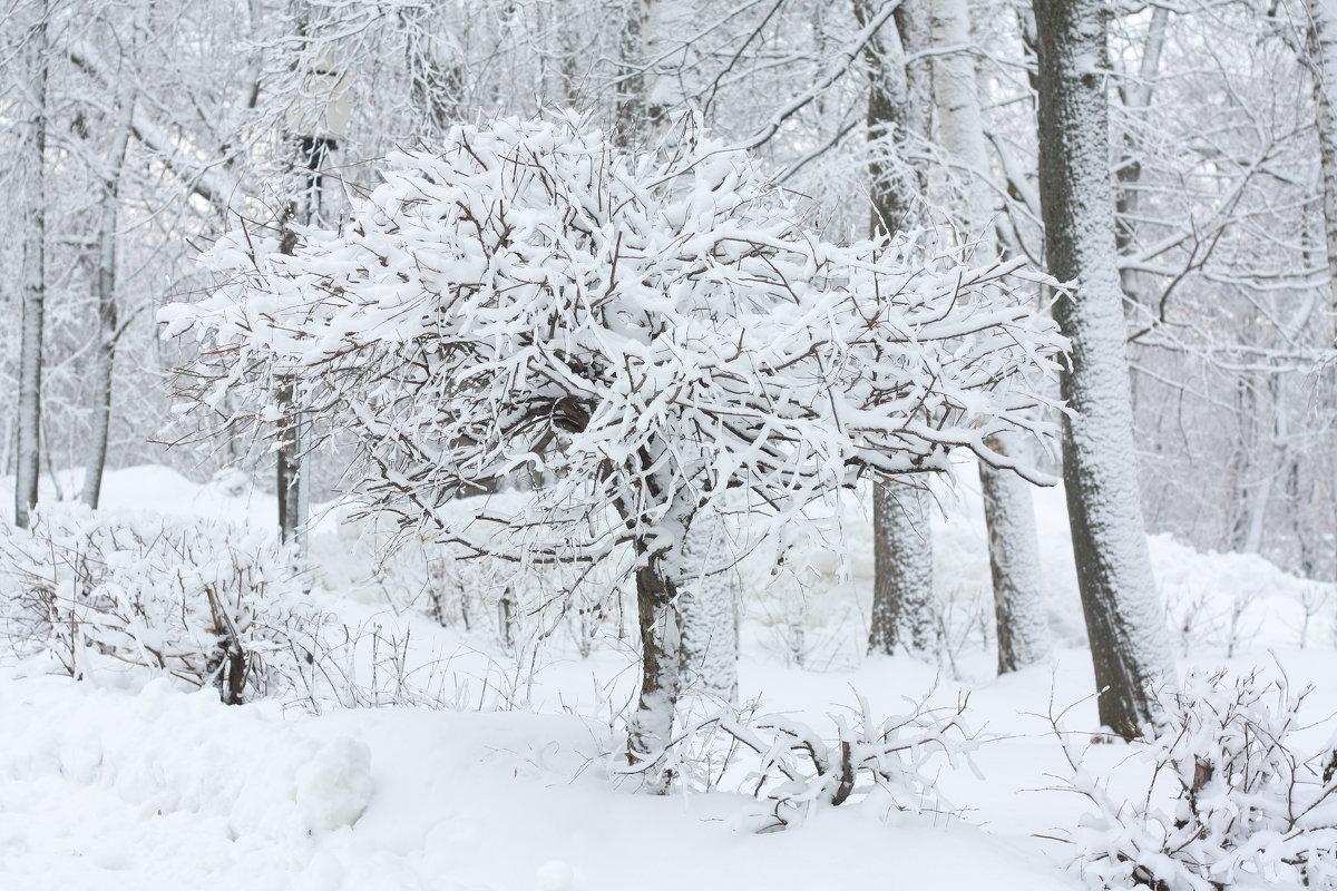Зима - Алина Сержантова